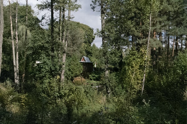 Image of House Hidden in a Greenwood (2015)