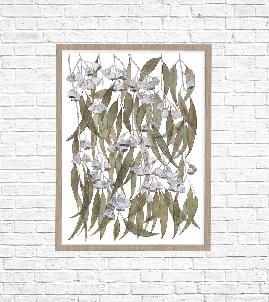 Image of Eucalyptus caesia Fine Art Print