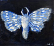 Image of Blue moth