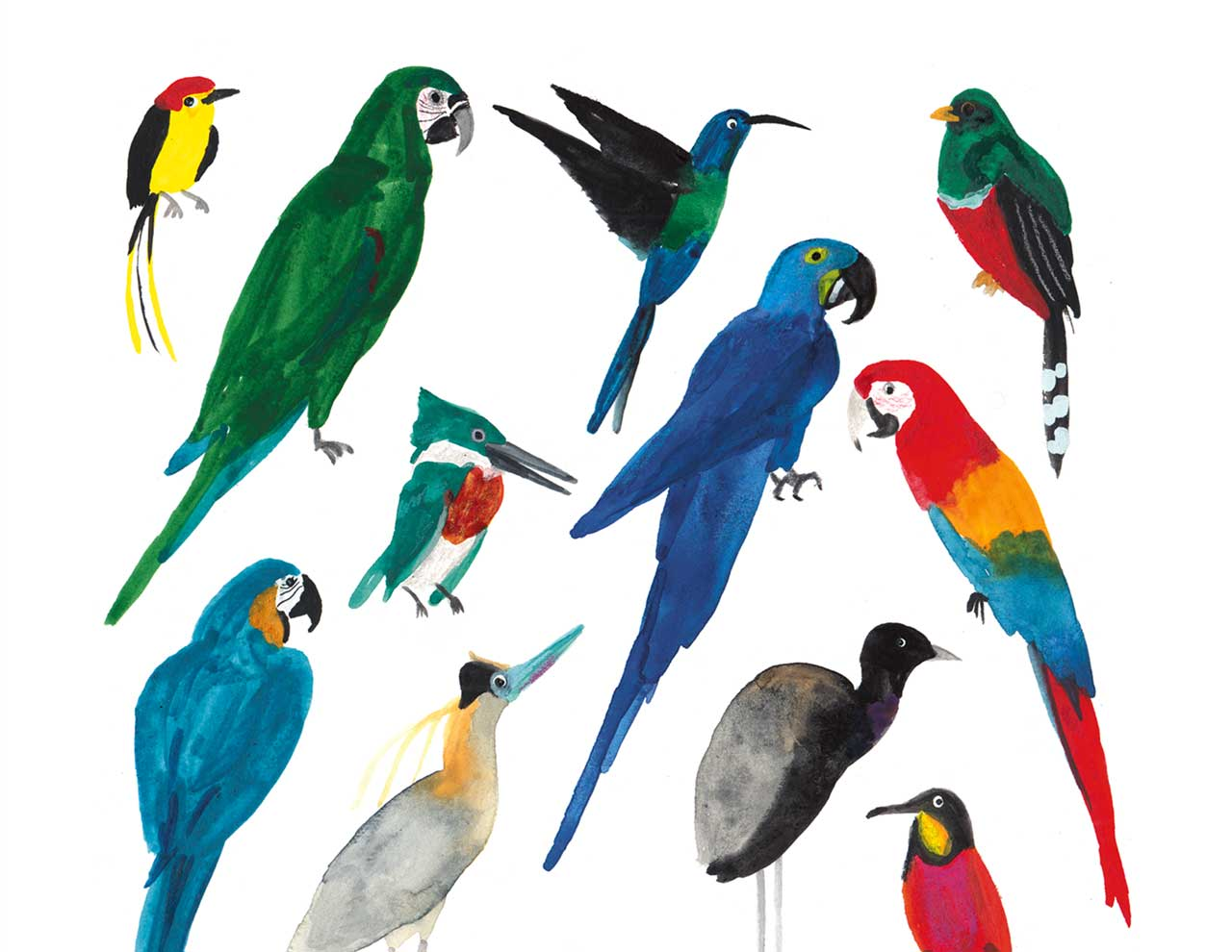 Image of Birds of the Amazon