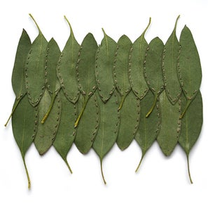 Image of Eucalyptus Double Row (Greens)