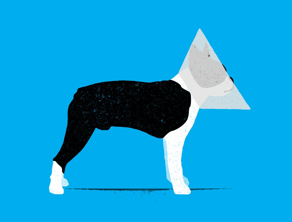 "Image of ""Cone of Shame"""