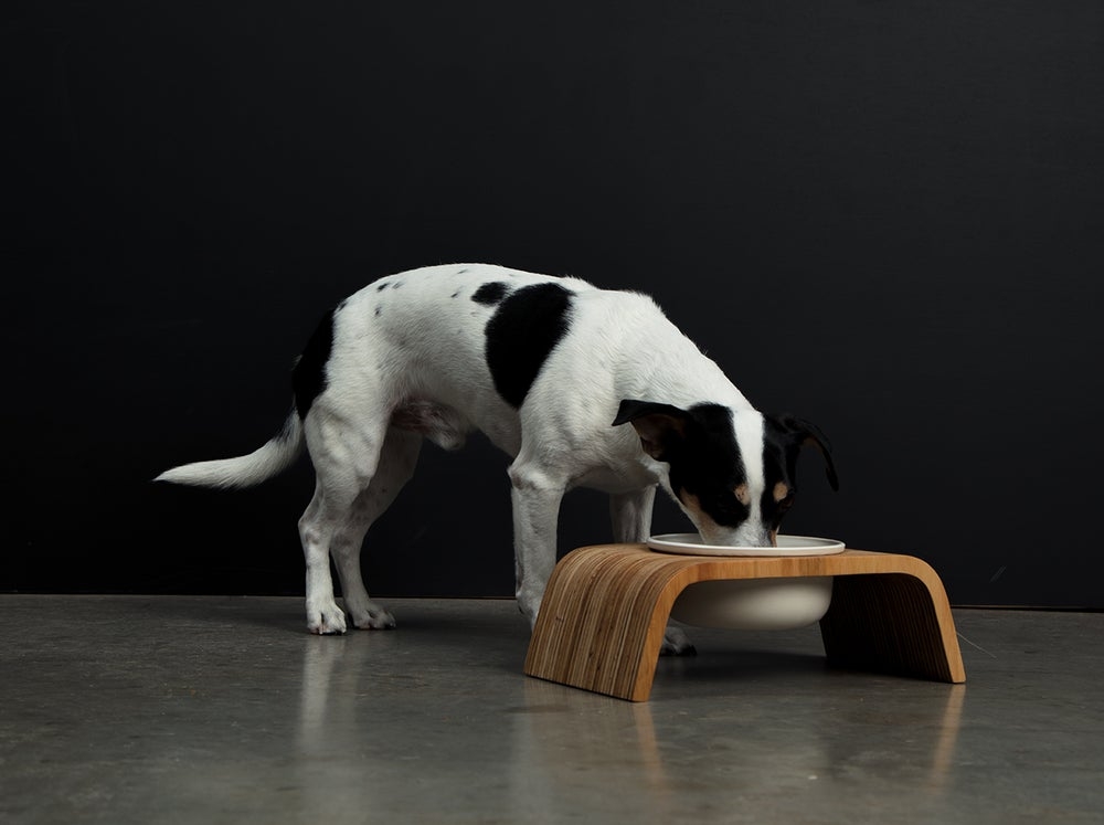 Image of Dog Bowl Stand Set: Single Short