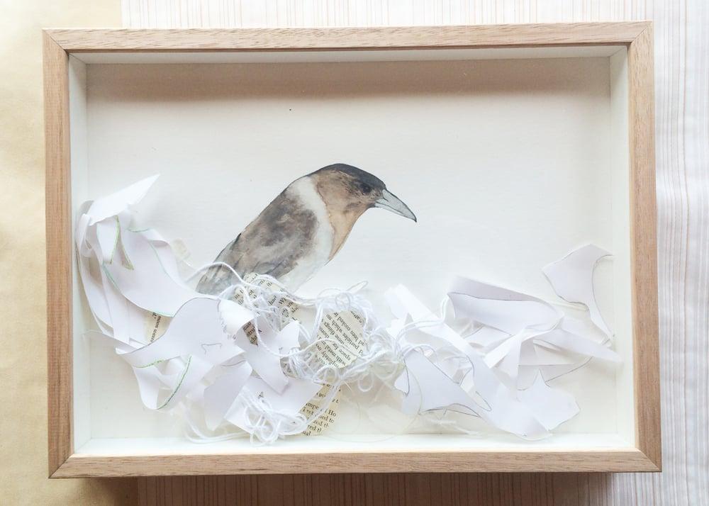 Image of Butcher Bird