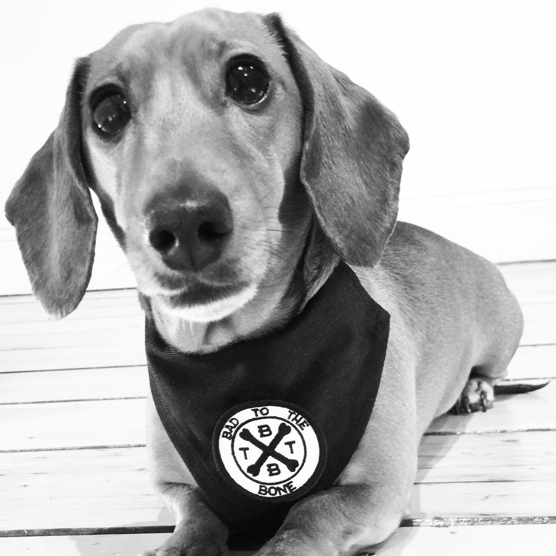 Image of BTTB - Signature Bandana