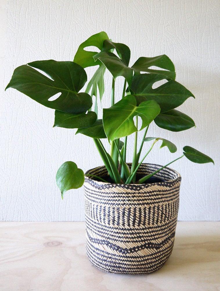 Image of Fruity basket