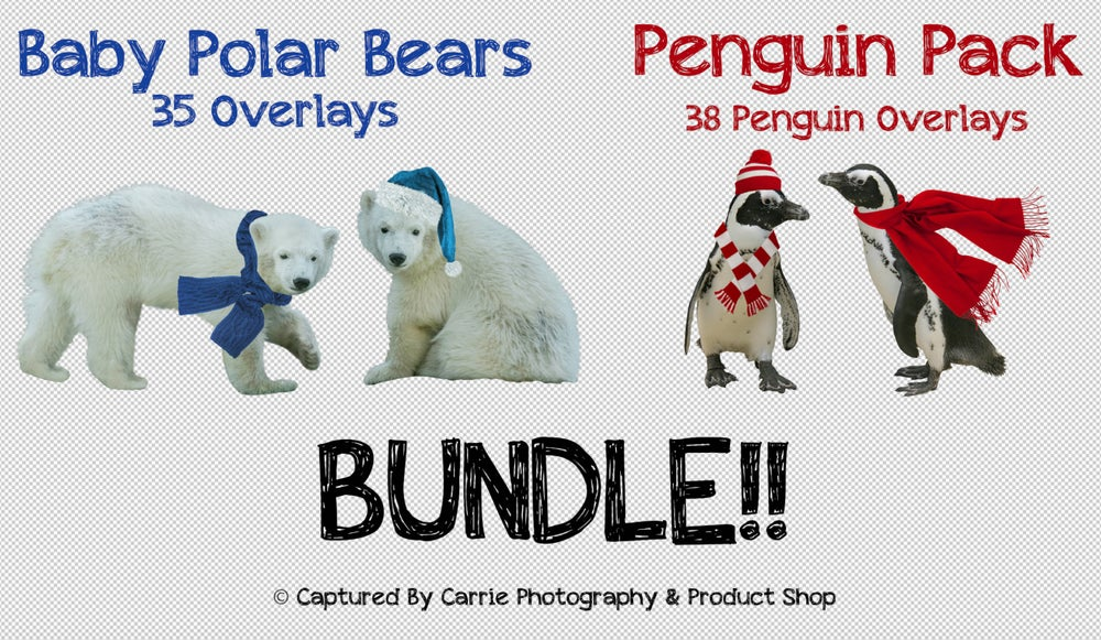 Image of Penguins & Baby Polar Bears BUNDLE