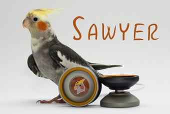 Image of Sawyer
