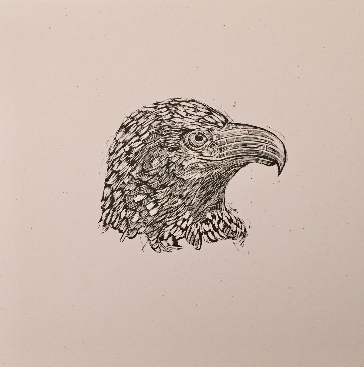 Reconstructed Bald Eagle