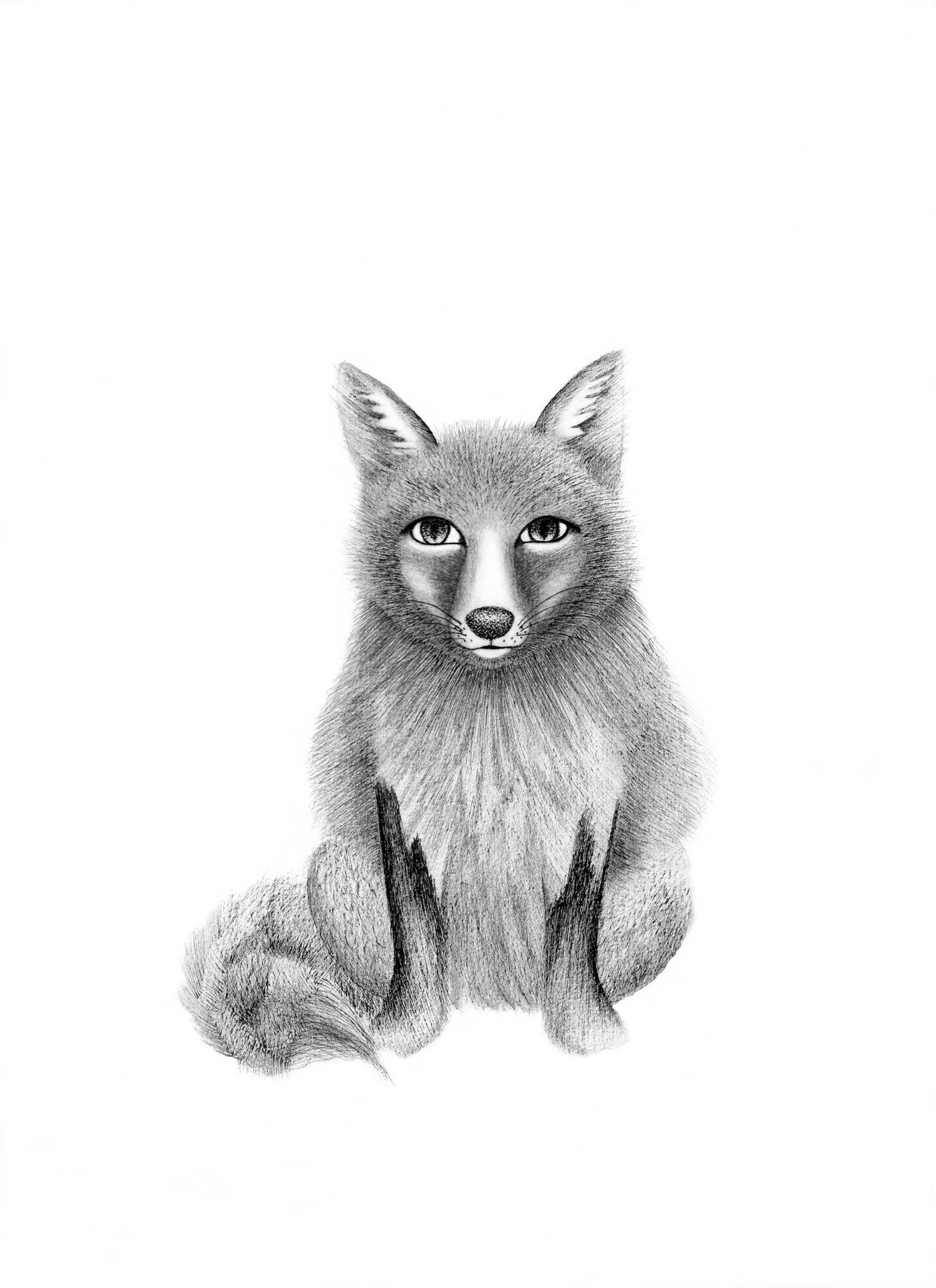 Image of Female Fox