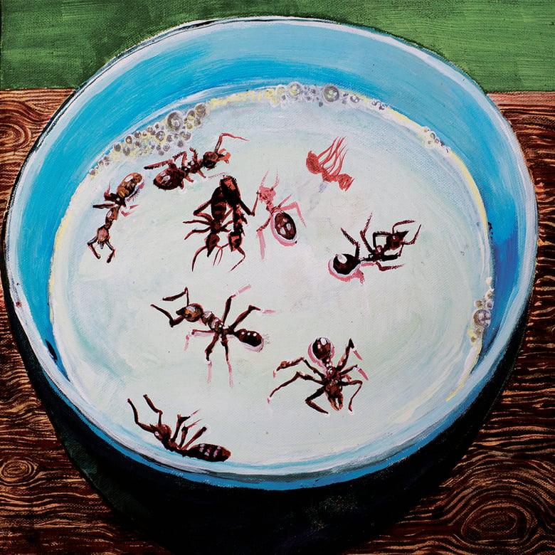 """Image of Dead Tenants/Drome split EP """"Ten Dead Ants/Peter Milk"""": CD, CS"""