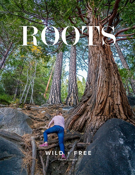 Image of ROOTS Content Bundle