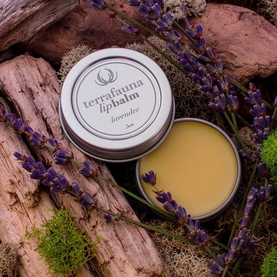Image of Lavender Lipbalm