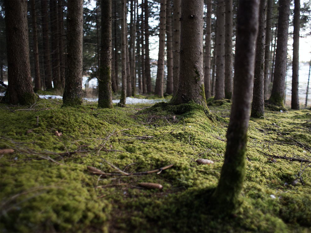 Image of Moss Forest