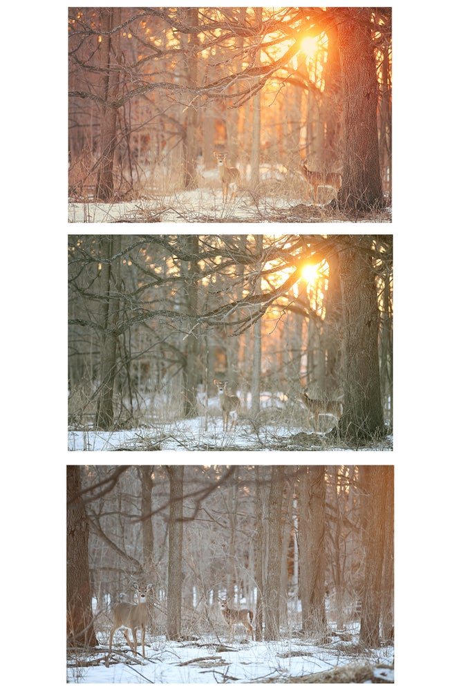 Image of Enchanted Forest Digital Backgrounds