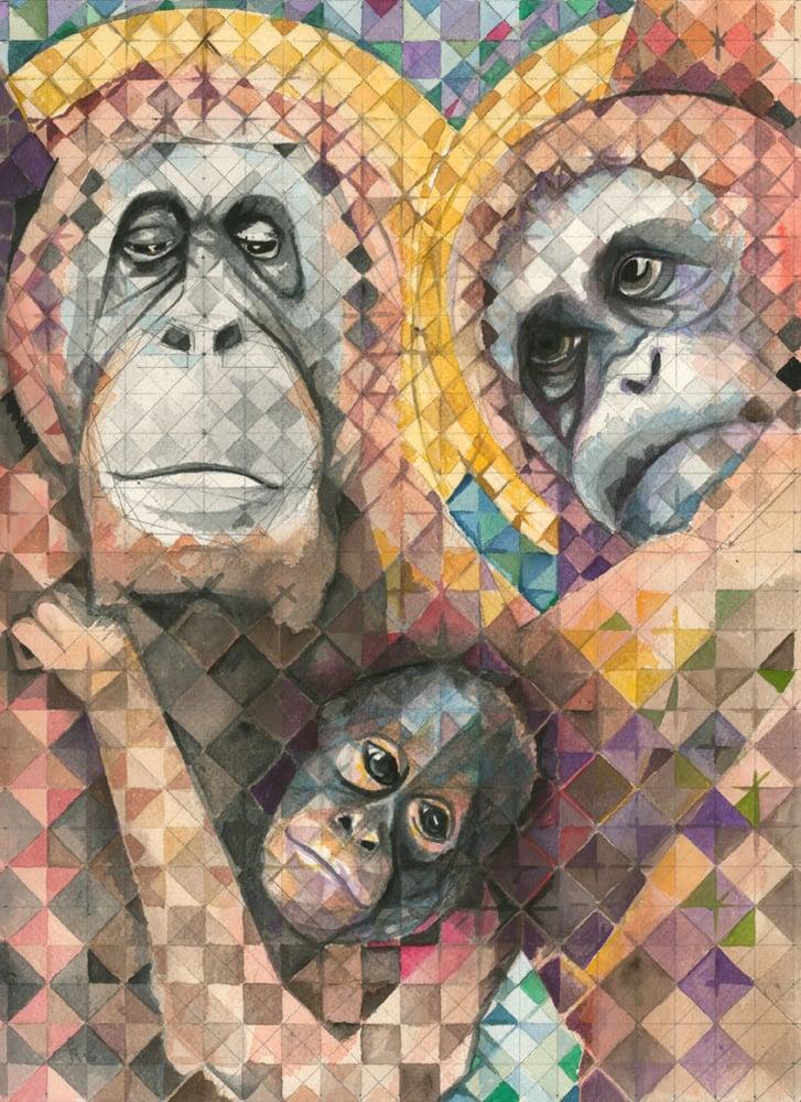 Image of Orangutans