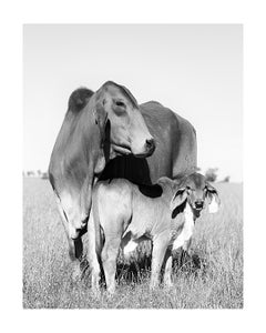 Image of Cow & Calf 2
