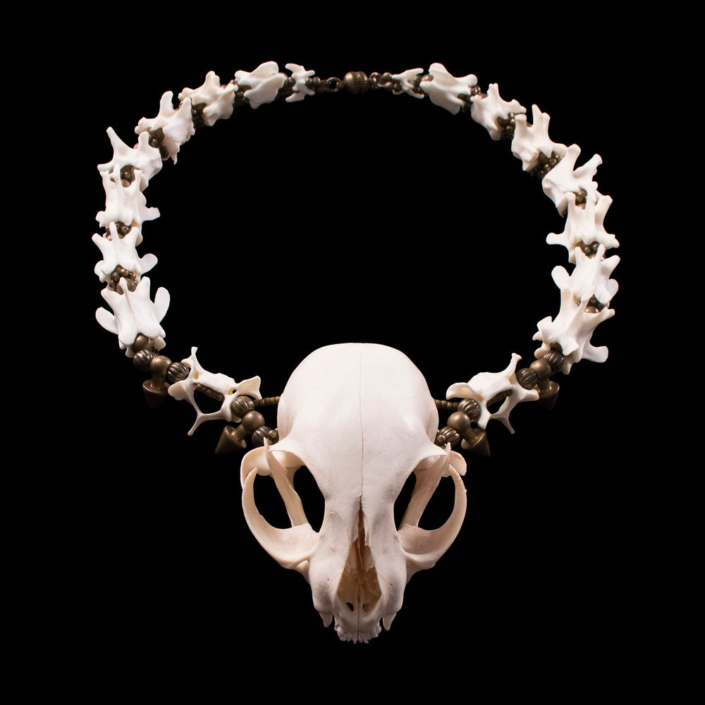 "Image of ""Cica"" Kitten Skull and Bone Necklace"