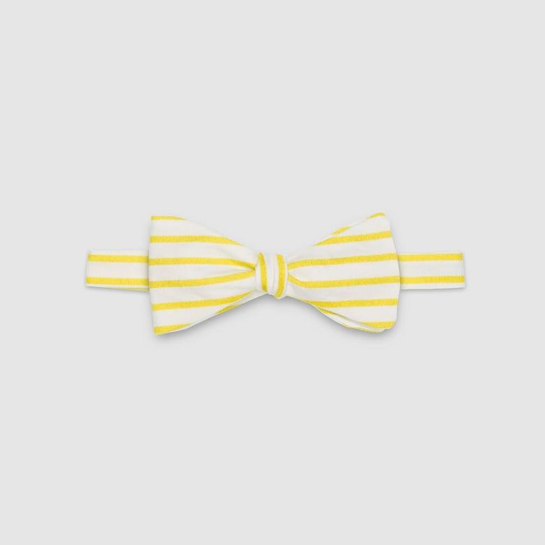 Image of CALLIOPE – the bow tie