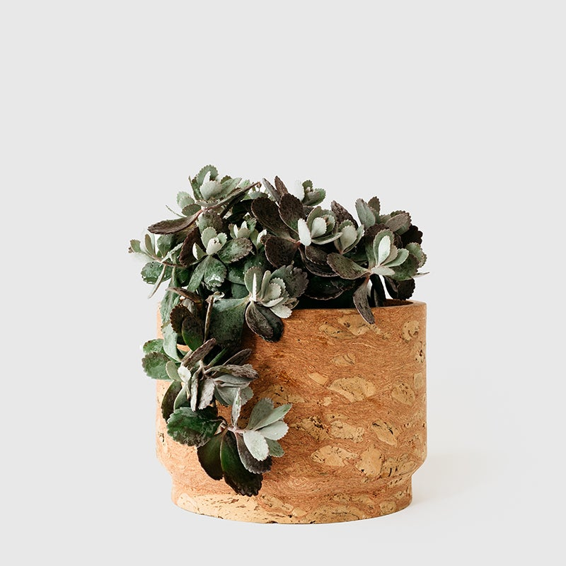 Image of Modern Pink Cork Planter 11""