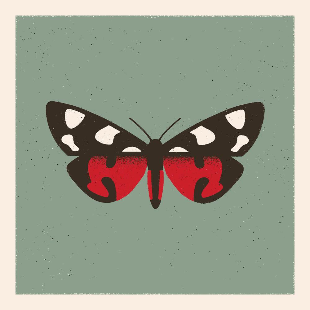 Image of Moth #1 (callimorpha dominula)