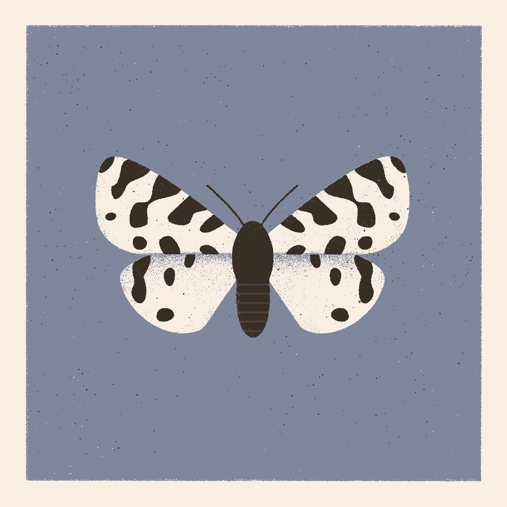 Image of Moth #3 (ocnogyna zoraida)