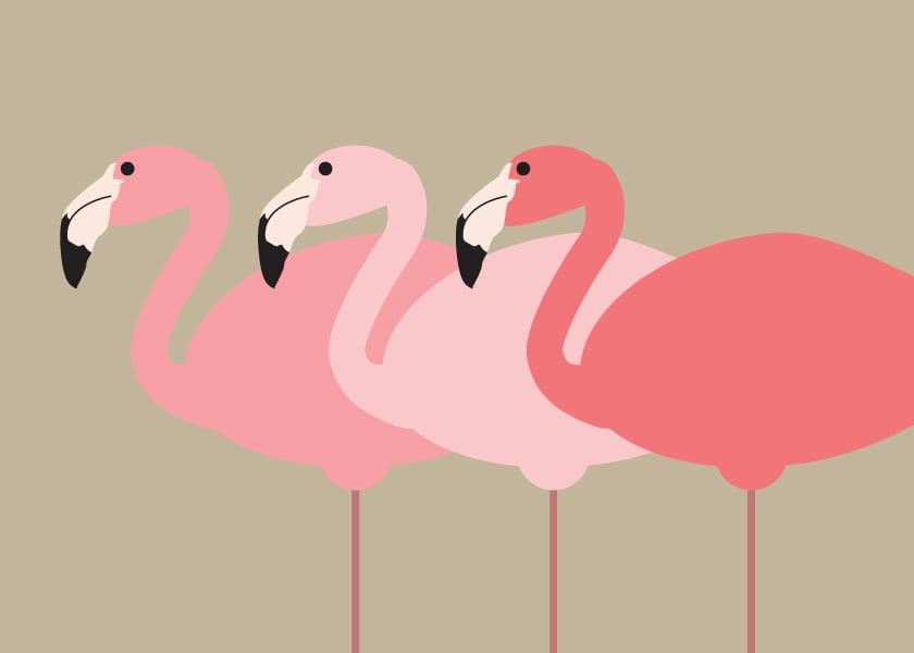 Camels, Flamingos, Rhinos Collection
