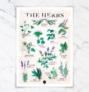 "Image of ""The Herbs"""