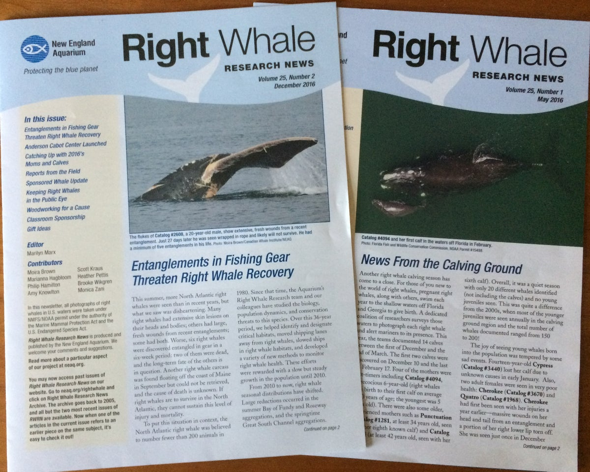 Right Whale Research Newsletter