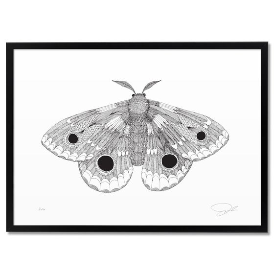 Image of Print: Moth
