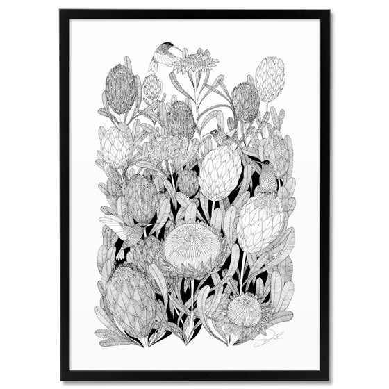 Image of Print: Proteas & Hummingbirds