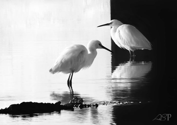 "Image of ""Two Egrets in Black and White No. 1"" Museum Print"