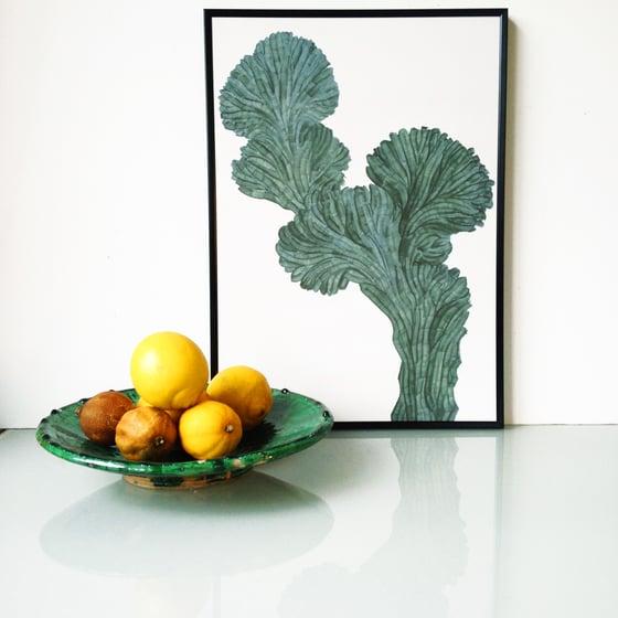 Image of Myrtillo Cactus A3