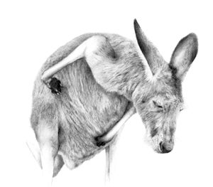 Image of 'GREY 2' Limited Edition Print