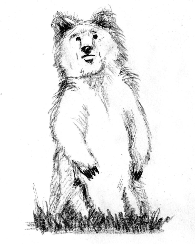 Image of Bear Print #2