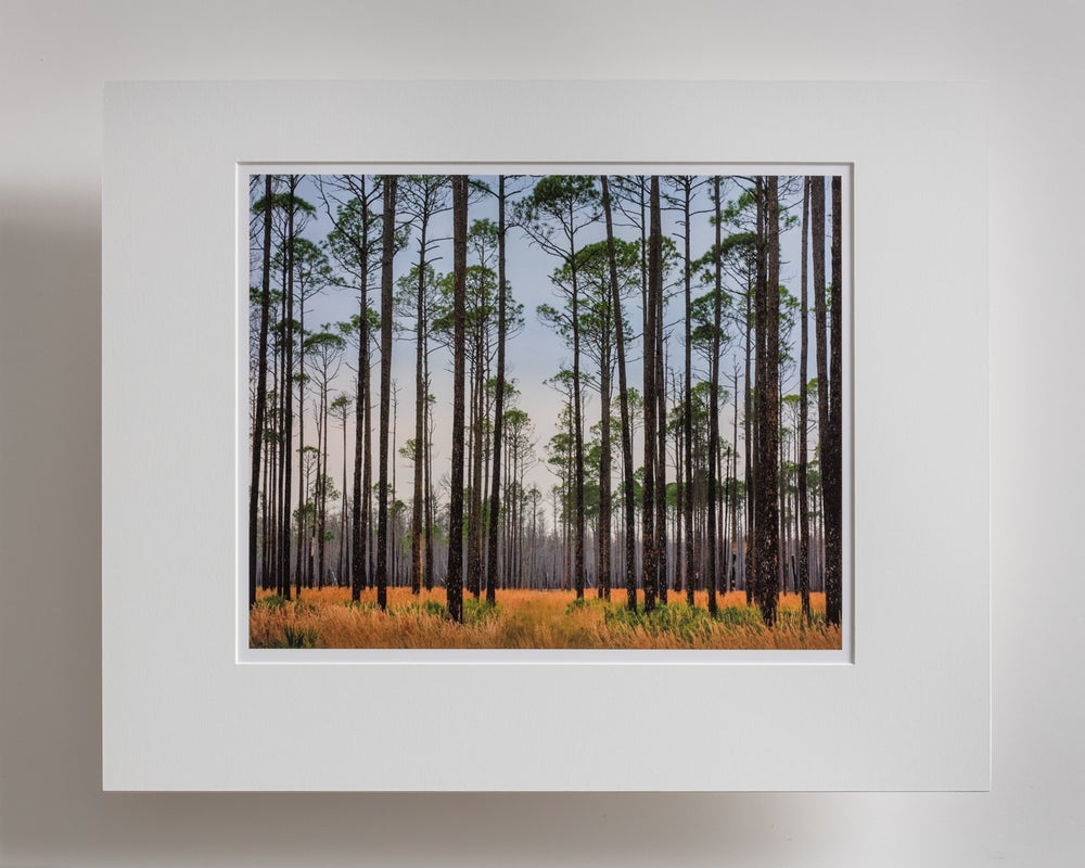 Image of Georgia Pines