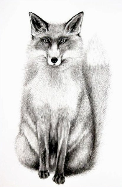 Image of Fox (British Wildlife Series)