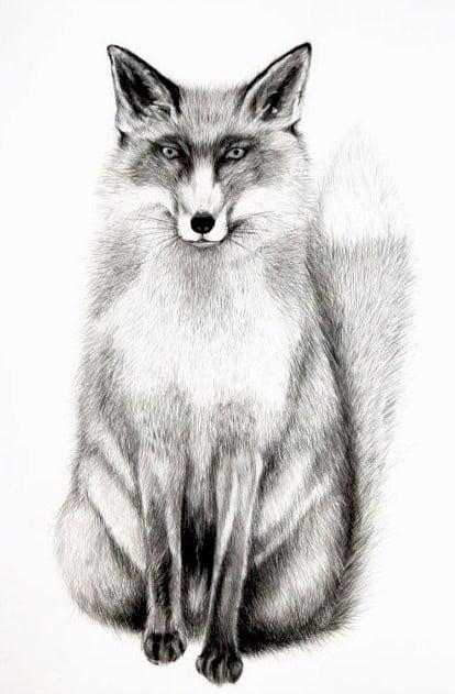 Image of Fox (British Wildlife Series)