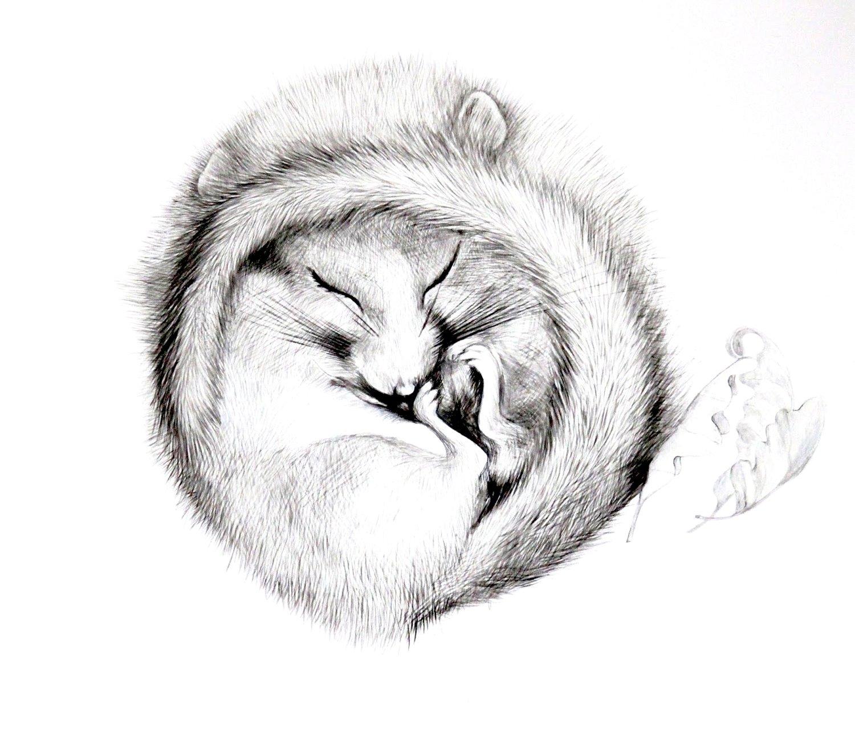 Image of Doormouse (British Wildlife Series)