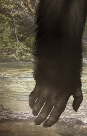 Bluff Creek Bigfoot