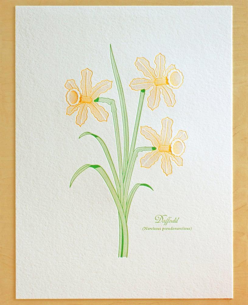 Image of DAFFODIL Print