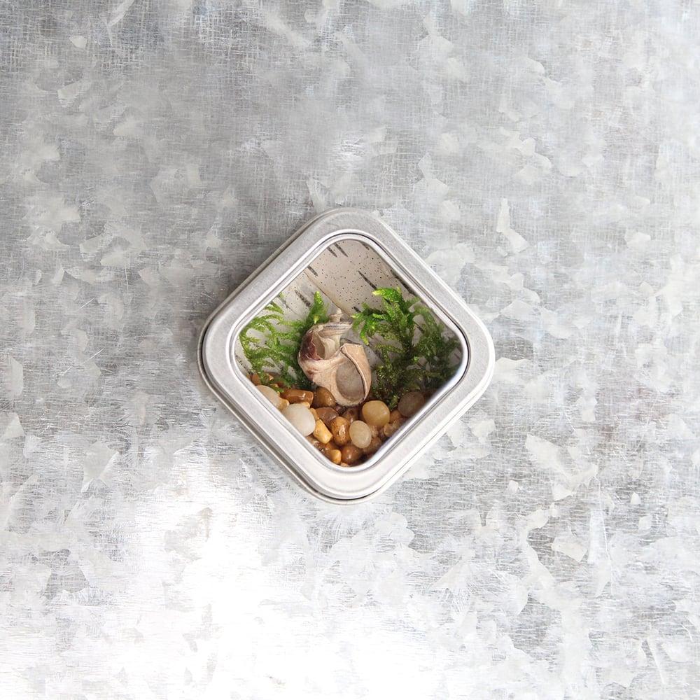 Image of Seashell Kitchen Art, River-themed Fridge Magnet