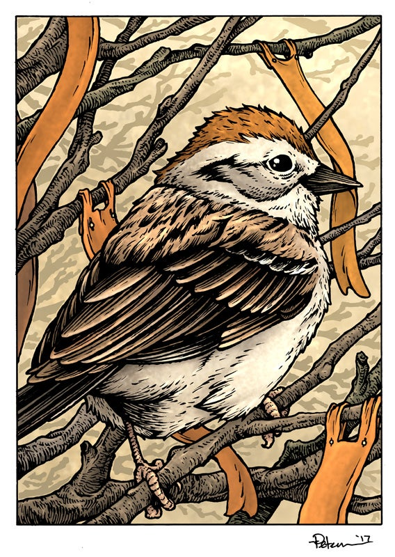 Image of Sparrow Print Matted 8x10