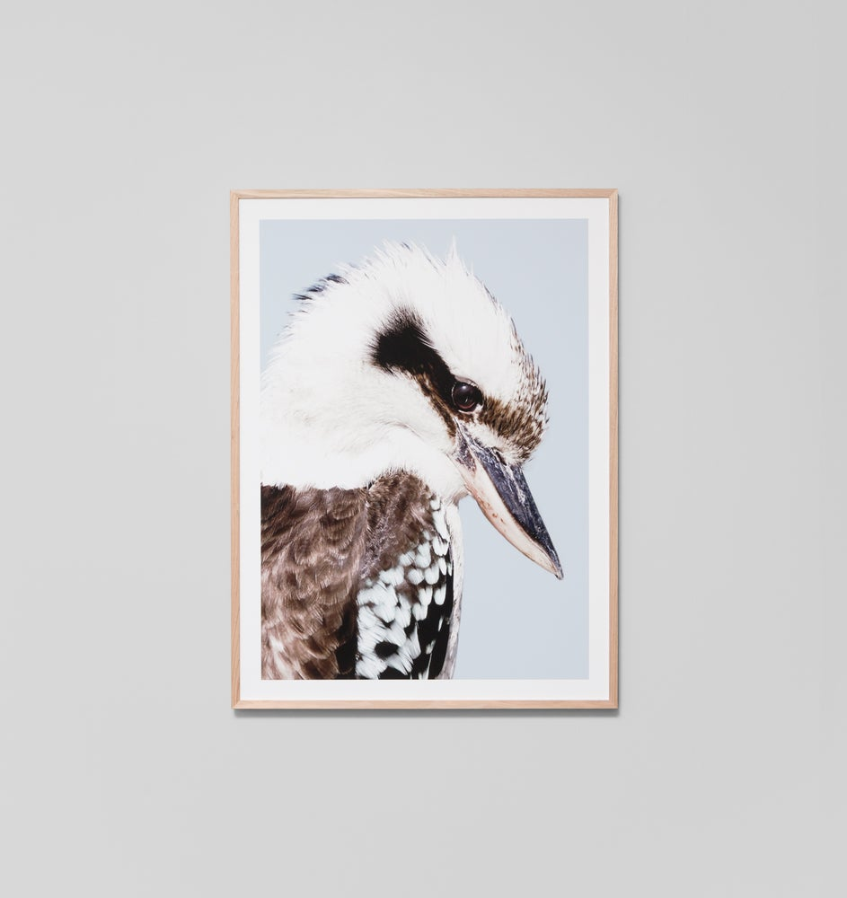 Image of Kookaburra Framed photographic print