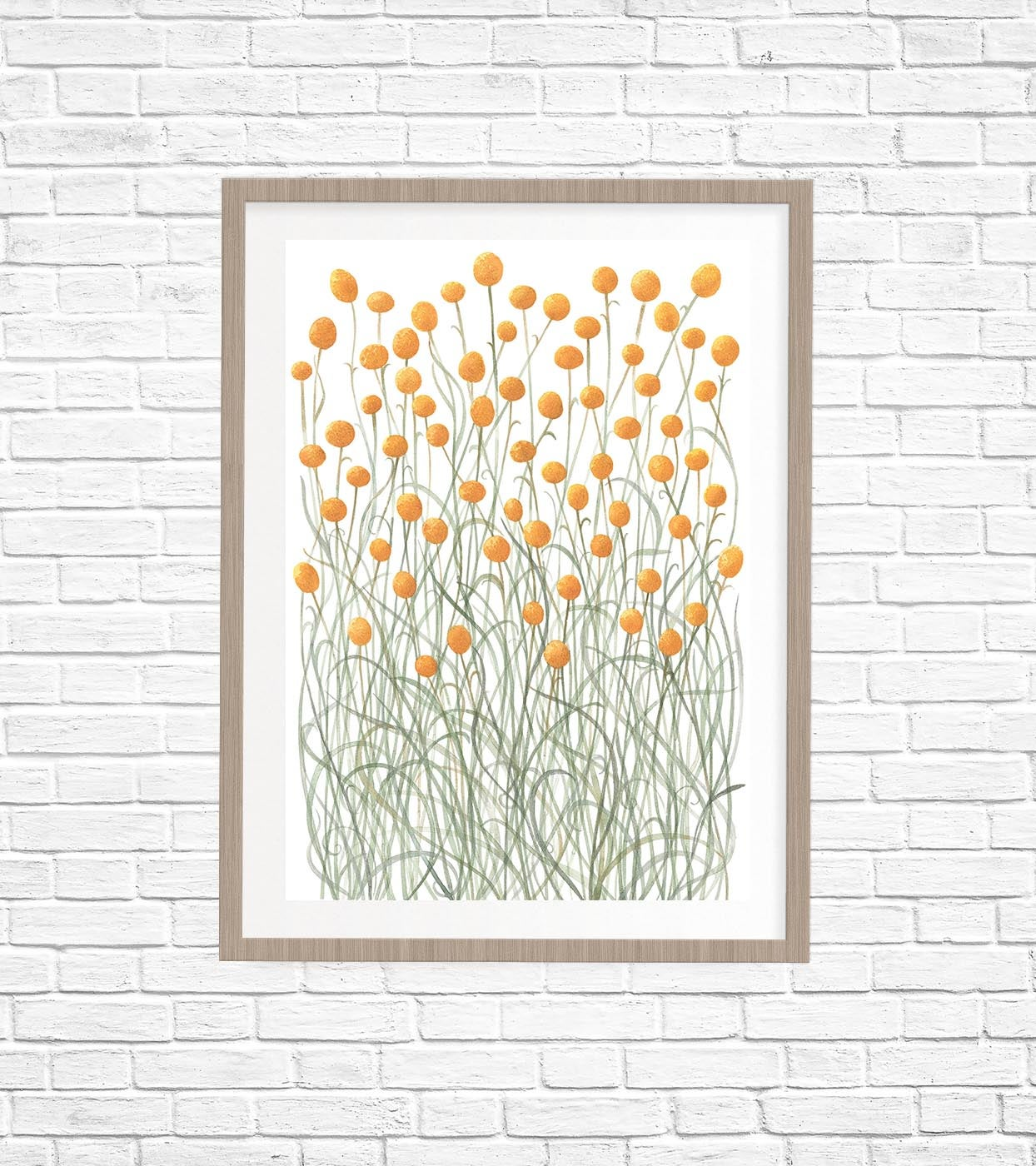Image of Billy Buttons Fine Art Print