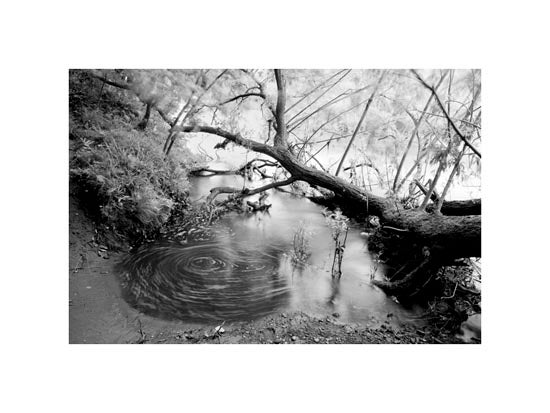 Image of Riverbank #1 - Wylam