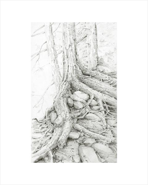 Image of Multnomah Roots
