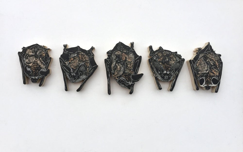 Image of Set of 5 Pallid Bats