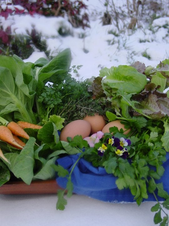 Image of Orion Rising Winter CSA