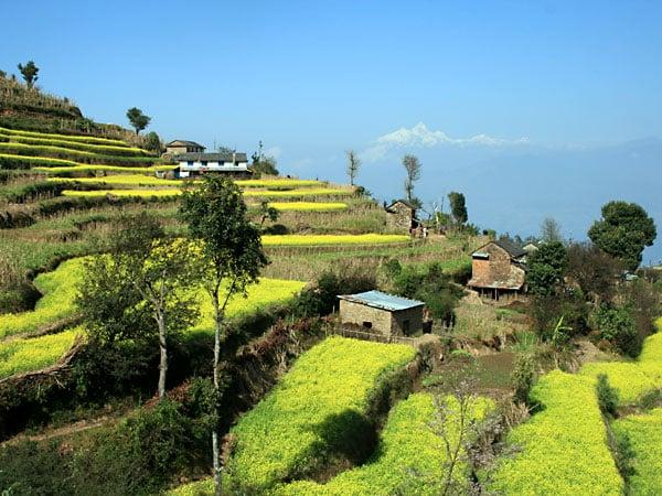Image of Nepali Lekali